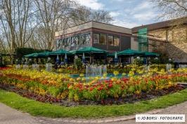 Lahr Tulpen im Stadtpark